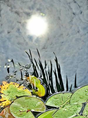 Photograph - Lily Pad Reflection by Lorella Schoales