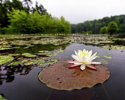 Photograph - Lily Pad View by Alan Raasch