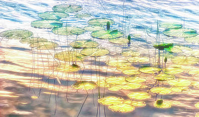 Photograph - Lily Pads # 7 by Glenn Gemmell