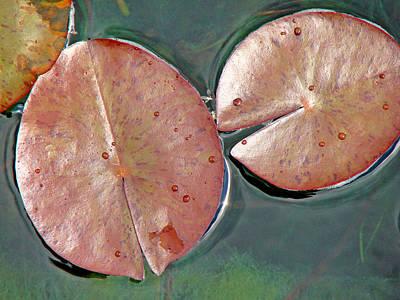 Lily Pads 1 Art Print by Diana Douglass