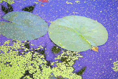 Photograph - Lily Pads And Duckweed Dow Gardens Painterly 2018 by Mary Bedy