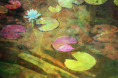 Photograph - Lily Pads And Lotus 5275 Idp_2 by Steven Ward