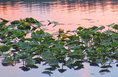 Photograph - Lily Pads And Pink Water by Karen Molenaar Terrell