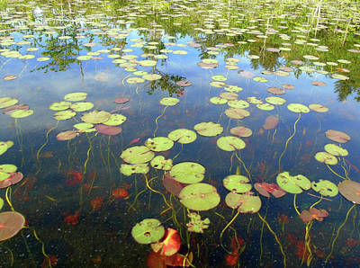 Lily Pads And Reflections Art Print