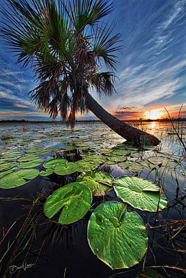 Photograph - Lily Pads And Sunset by David A Lane
