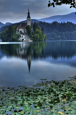 Lily Pads At Lake Bled Art Print