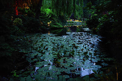 Photograph - Lily Pads At Night by Michael Bessler