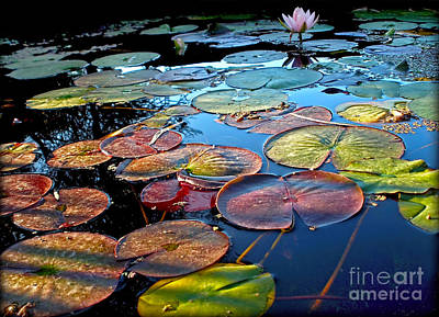 Lily Pads At Sunset Print by Kaye Menner