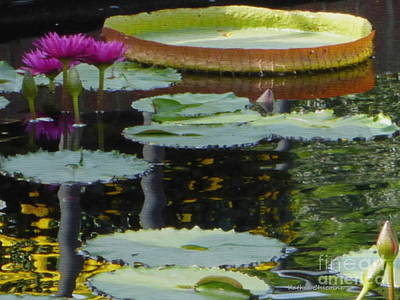 Photograph - Lily Pads by Kathie Chicoine