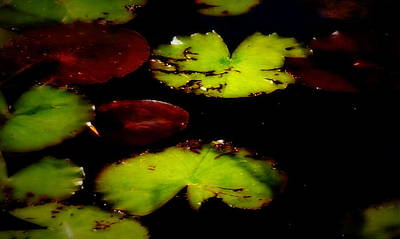 Photograph - Lily Pads by Laurie Pike