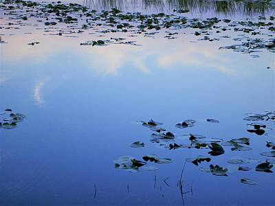 Blue Sky Photograph - Lily Pads by Ric Schafer