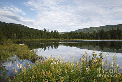 Roadside America Photograph - Lily Pond - White Mountains New Hampshire Usa by Erin Paul Donovan