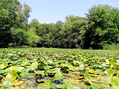 Photograph - Lily Pond #6 by Ed Weidman