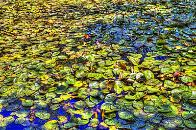 Photograph - Lily Pond At Spur Cross Ranch by Roger Passman