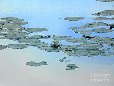 Photograph - Lily Pond by Daun Soden-Greene