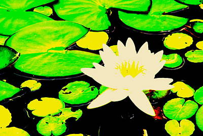 Photograph - Lily Pond by Douglas Pike