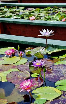 Photograph - Lily Pond E by Phyllis Spoor