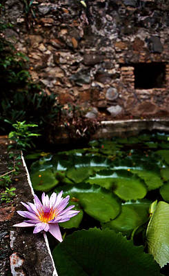 Lily Pond In Ruins. Usvi Art Print