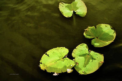 Wall Art - Photograph - Lily Pond by Jessica Manelis