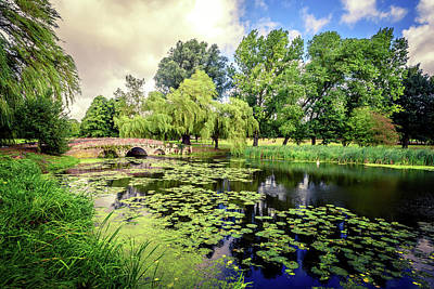Photograph - Lily Pond Of England by John Williams