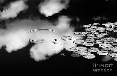 Lily Pond Art Print by Tim Gainey