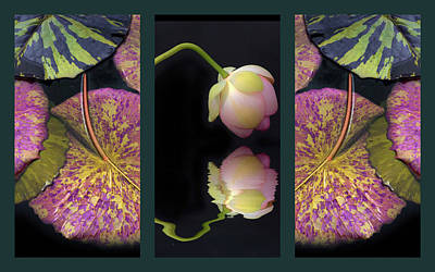 Collage Photograph - Lily Pond Triptych by Jessica Jenney