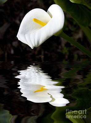 White Lily Photograph - Lily Reflection by Avalon Fine Art Photography