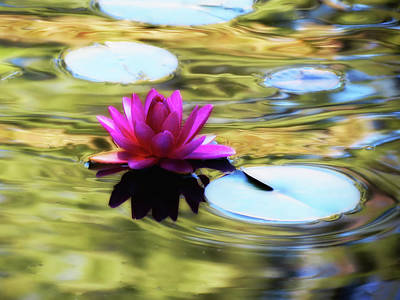 Photograph - Lily Ripples - Water Lily by MTBobbins Photography