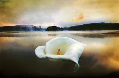 Photograph - Lily Rising by Yuri Lev