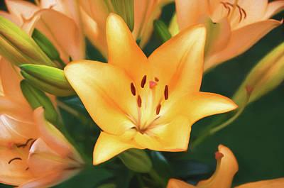 Lily Art Print by Steven Michael