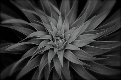 Photograph - Lily Swirl by Melissa Lane