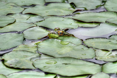 Photograph - Lily The Frog by Dawn J Benko