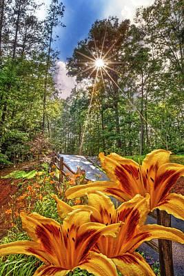 Floral Scene Garden Photograph - Lily Trail by Debra and Dave Vanderlaan