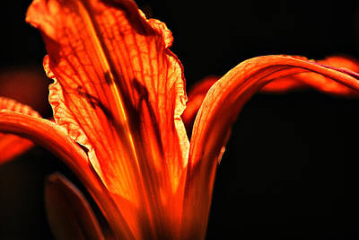 Flower Photograph - Lily Underneath by Emily Stauring