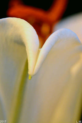 Que Photograph - Lily V by Lisa Wooten