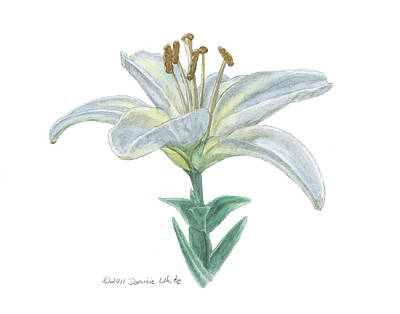 Lily Watercolor Art Print