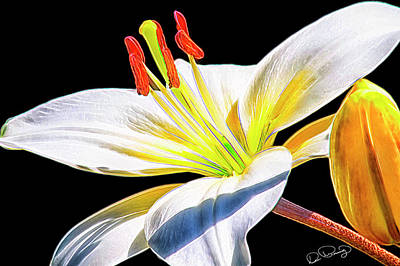 Photograph - Lily White by Dee Browning