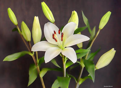 Photograph - Lily White by Roberta Byram