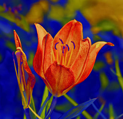 Digital Art - Lily With Sabattier by Bill Barber