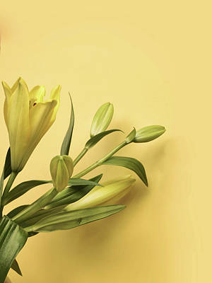 Lillies Photograph - Lily Yellow by Mark Rogan