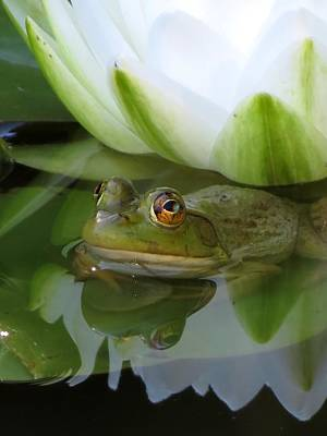 Photograph - Lilyfrog - Frog With Water Lily by MTBobbins Photography