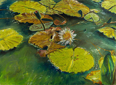 Lilly Pond Painting - Lilypad by Kathy Knopp