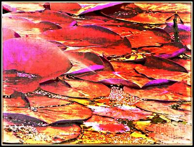 Photograph - Crimson Lilypads Floating.. by Jolanta Anna Karolska