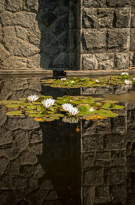 Photograph - Zen Reflections by Marilyn Wilson