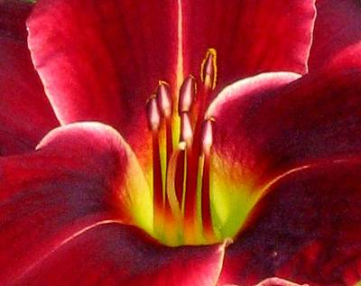 Red Daylily Photograph - Lily's Way by Marla McFall