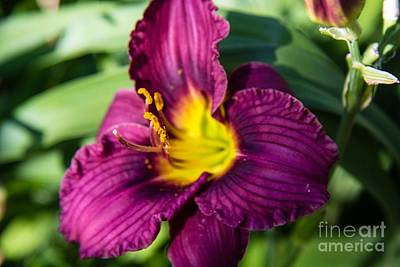 Science Collection - Lilytastic by Lisa Knauff