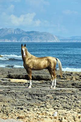 Konik Photograph - Golden Horse by Artur Baboev