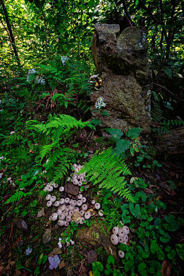 Photograph - Limberlost II by Rick Berk