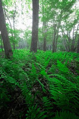 Shenandoah National Park Photograph - Limberlost IIi by Rick Berk