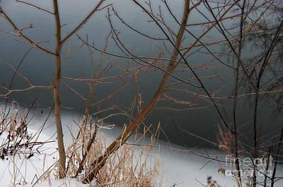 Photograph - Limbs Ice Snow by David Arment